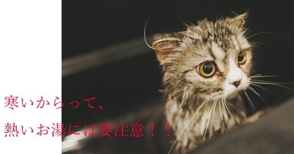にゃんのコピー